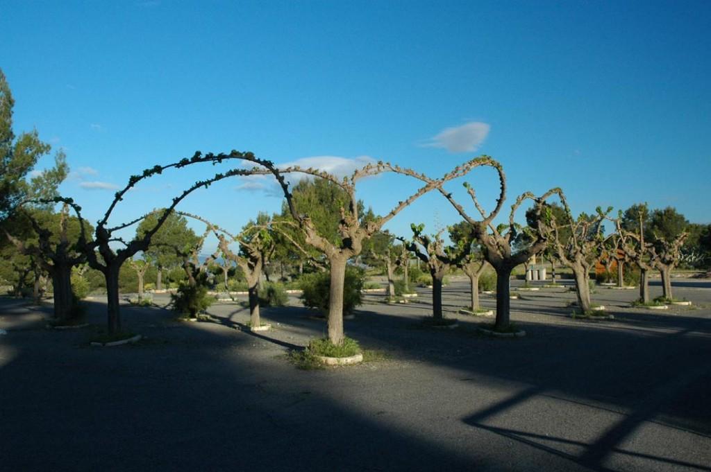 Plaza de las moreras
